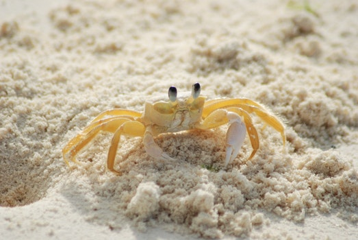 Yellow and White Crab on White Sand Beach during Daytime