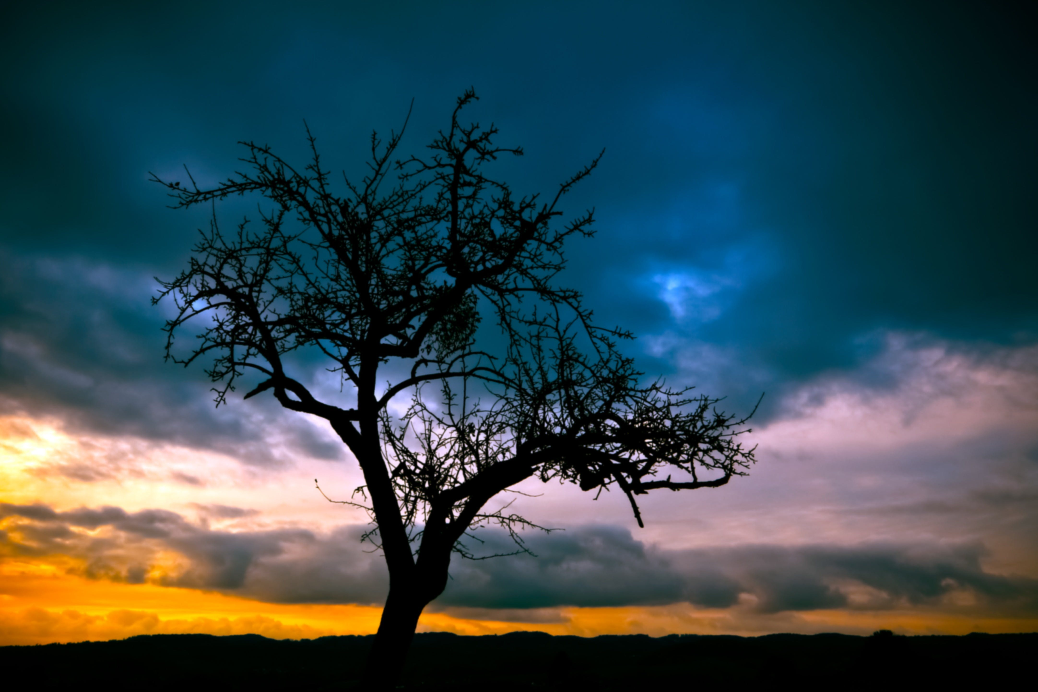 Silhouette of Bare Tree Under Dimmed Sky during Sunset