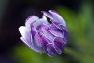 dew, flower, macro