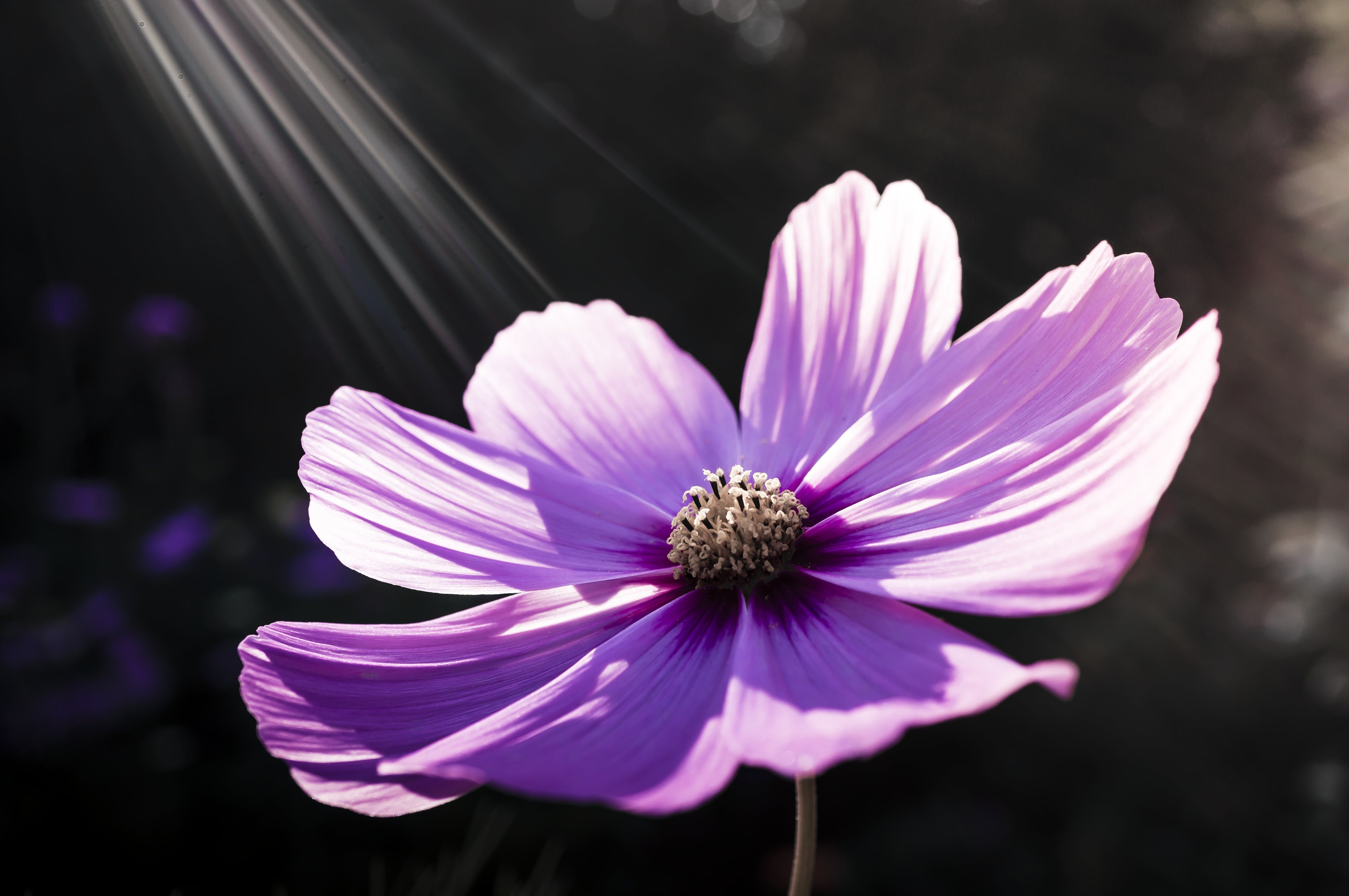 Purple Flower during Daytime
