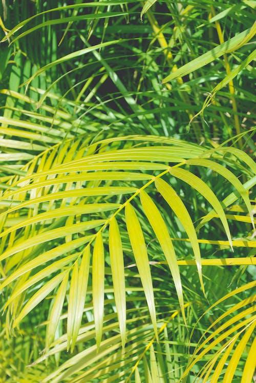 야자나무 잎, 여름 분위기, 태양의 무료 스톡 사진
