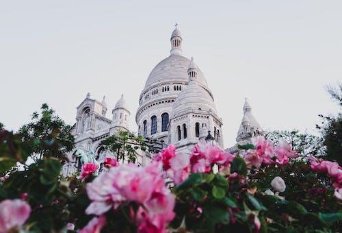 흰색 콘크리트 건물 근처 핑크 꽃