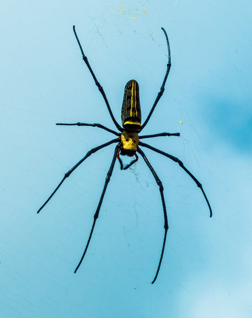 Are House Spiders Harmful?