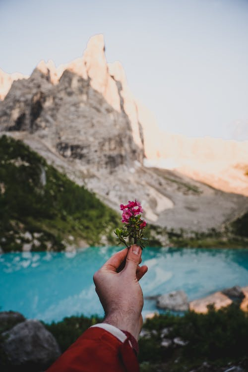 사람이 물 몸 근처 보라색 꽃을 들고