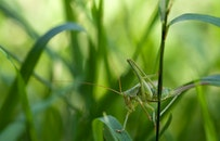 nature, grass, green