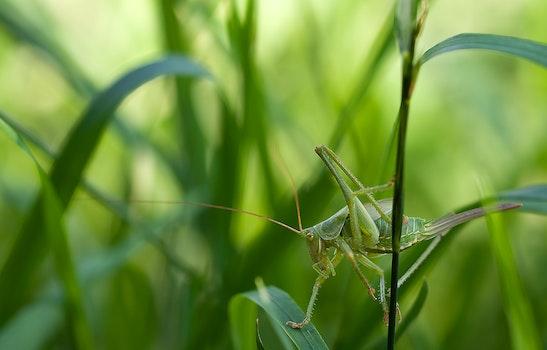 Kostenloses Stock Foto zu natur, gras, grün, insekt