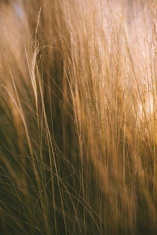Immagine gratuita di agricoltura, alto, ambiente