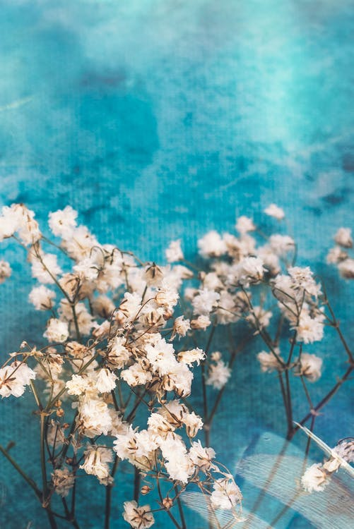Gentle white flowers placed in pool water