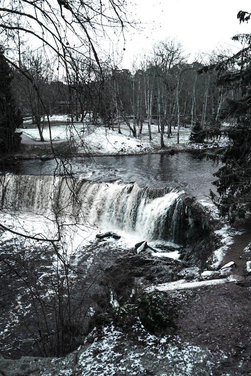 Imagine de stoc gratuită din apă, apă curgătoare, arbore, arbori