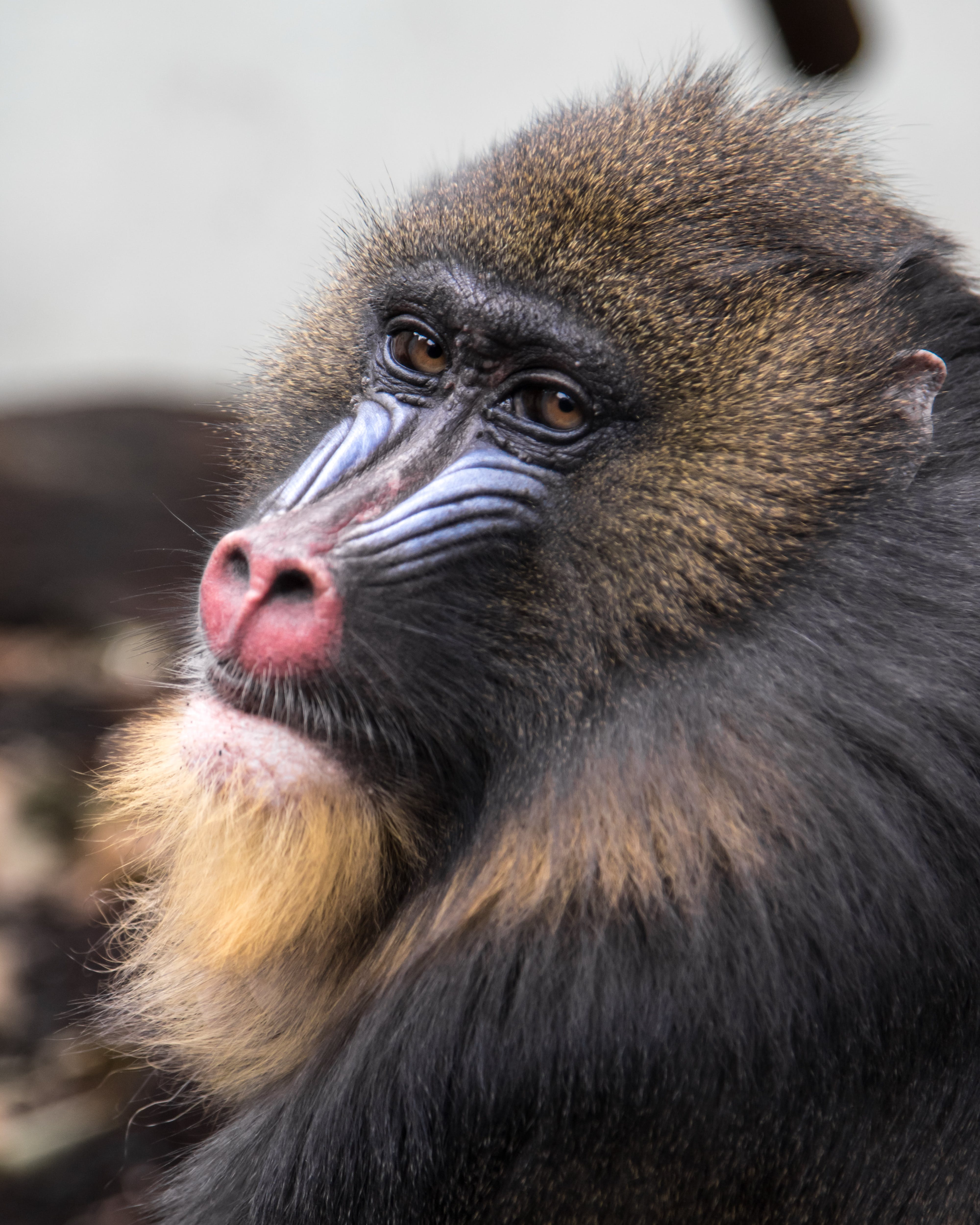 개코원숭이, 귀여운, 동물, 동물 사진의 무료 스톡 사진