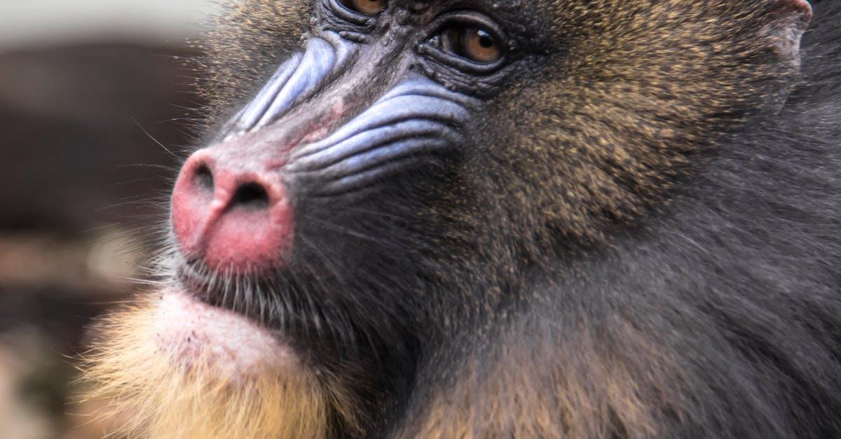 картинки с мордами обезьяны результате