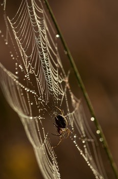 Brown and Black Spider Hanging on White Spider Web