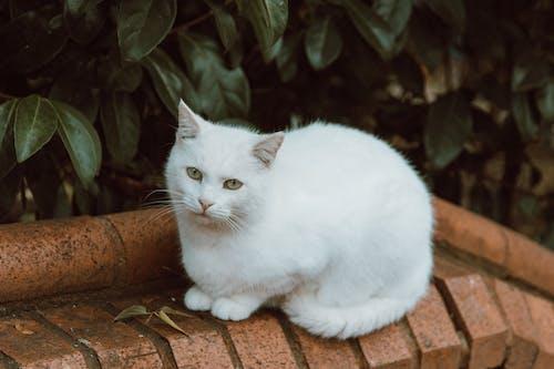 A Close-Up Shot of a White Cat