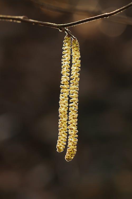散景攝影在樹莖上的黃色葉子