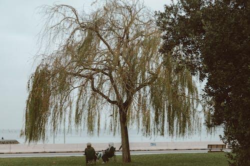 Photos gratuites de arbre, espace extérieur, être assis