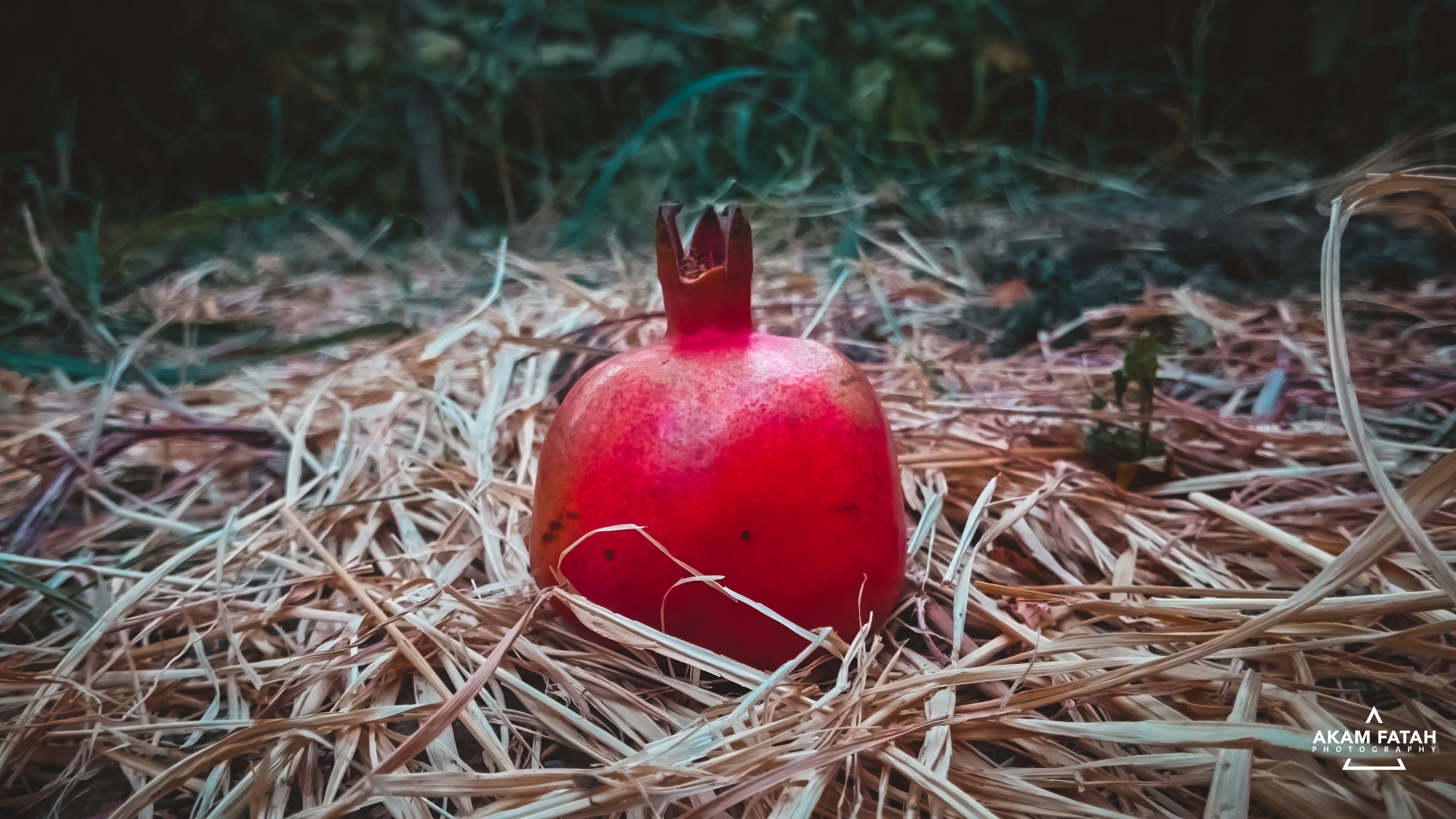 fall, food, fruit