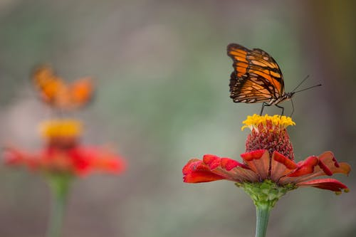 Free stock photo of butterfly, butterfly on a flower, colombia