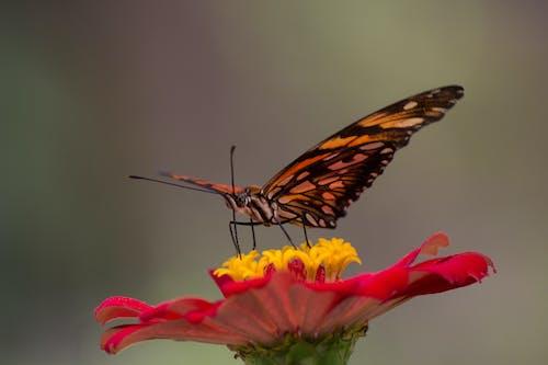 Fotos de stock gratuitas de colombia, flor, mariposa, mariposa en una flor