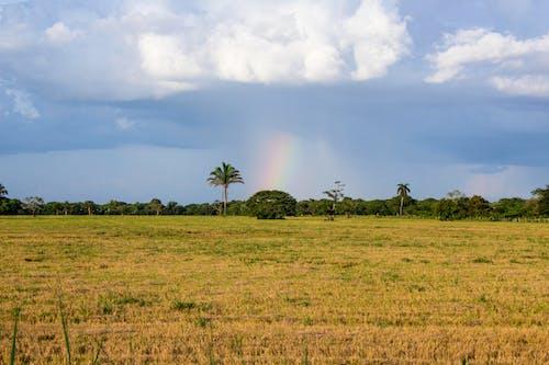 Fotos de stock gratuitas de árbol, arco iris, casanare, colombia