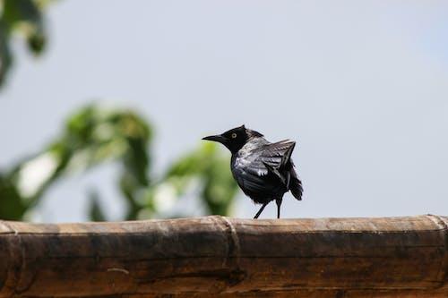 Fotos de stock gratuitas de pã¡jaro, pájaro negro