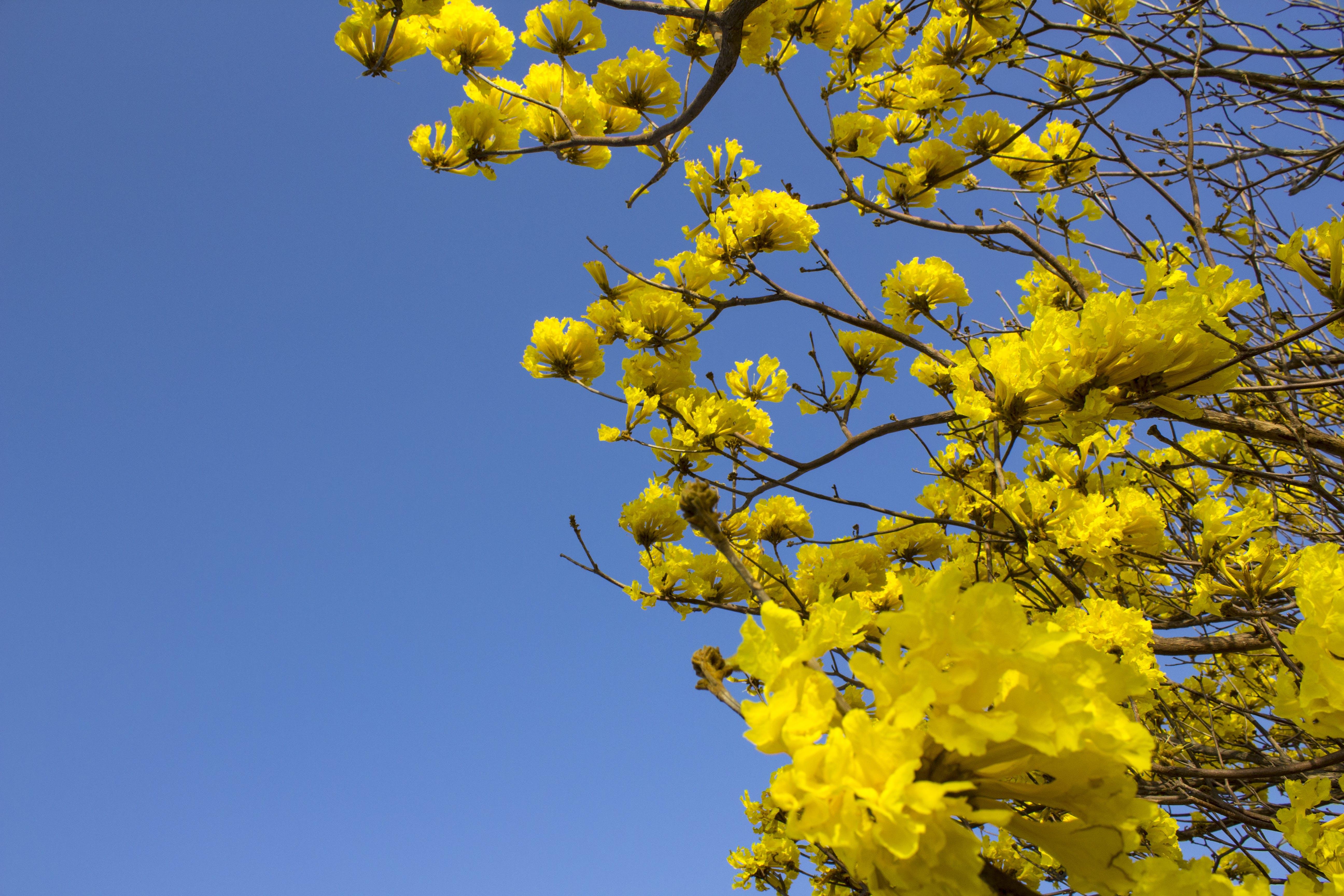 Free stock photo of casanare, colombia, flor amarillo, flower