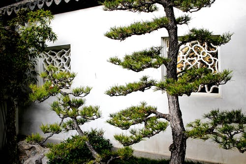 Free stock photo of Asian architecture, pine trees