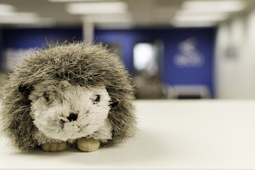 White and Gray Hedgehog Plush Toy on White Table Surface