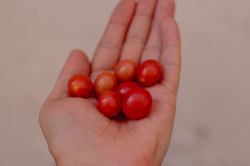 Unrecognizable person demonstrating handful of fresh small red cherry tomatoes while standing on blurred background on street during harvest season