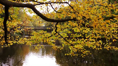Free stock photo of bridge, leafs