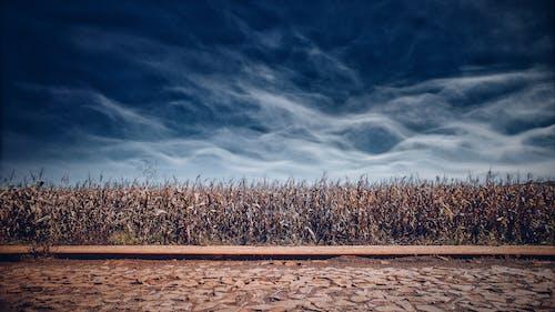 Foto d'estoc gratuïta de alba, blau, camps de cultiu, capvespre