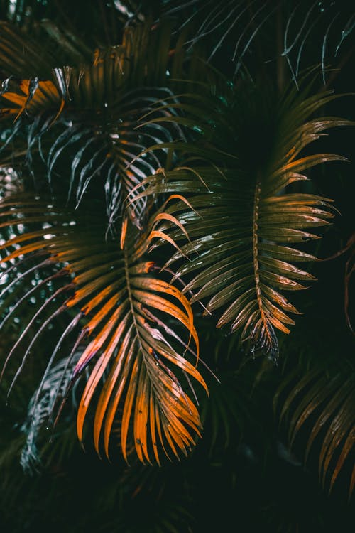 Lush faded palm leaves growing in evening