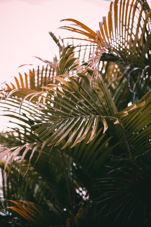 Palm leaves under light sky in daytime