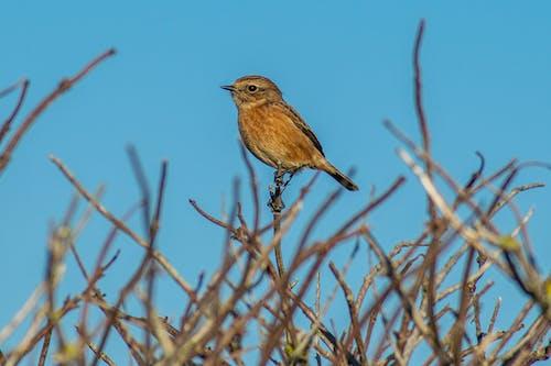 Free stock photo of animals, avian, bird