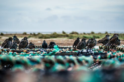 Free stock photo of starling