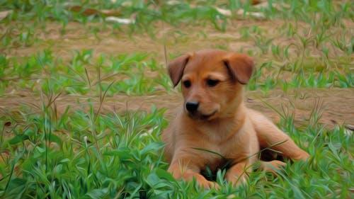 Free stock photo of baby dog, dog, nature