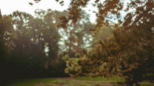 Foto d'estoc gratuïta de boira, fosc, parc, pluja