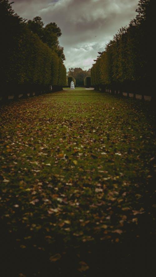 Free stock photo of cold, dark, foliage, park
