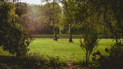 公園, 長凳, 霧 的 免費圖庫相片