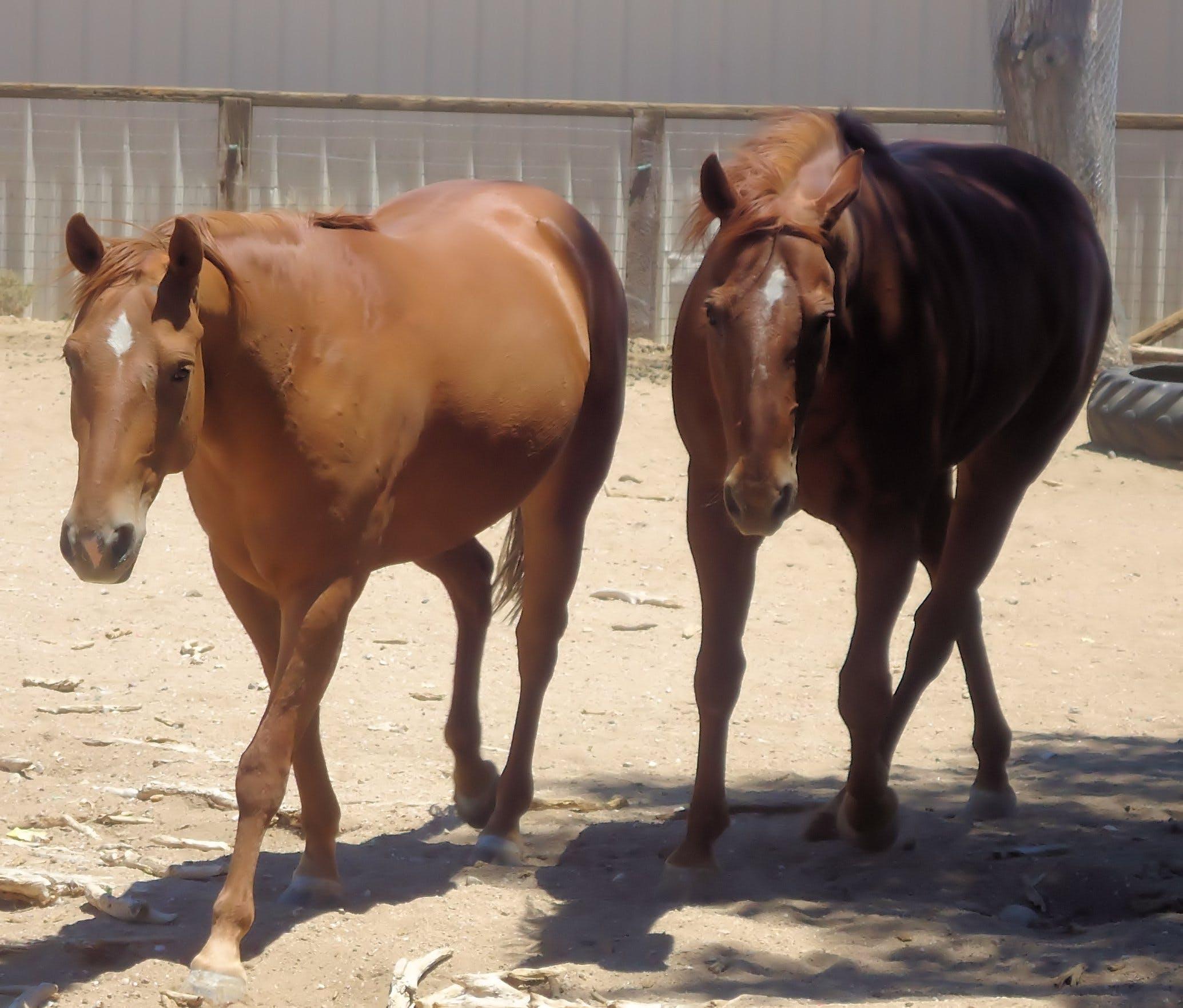 Free stock photo of barn, horses, ranch