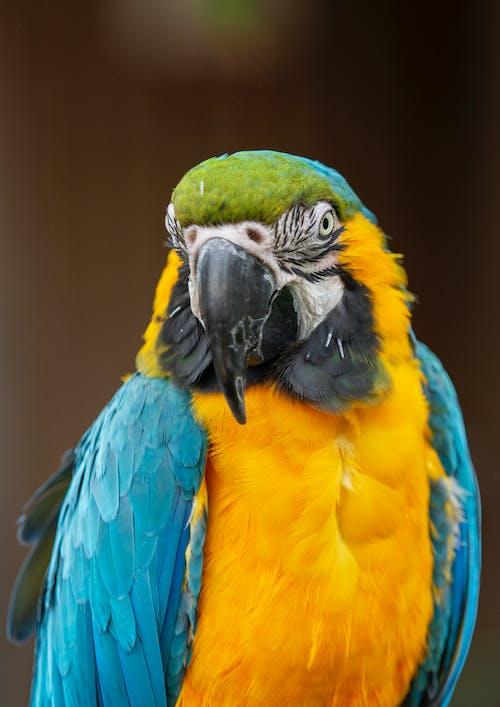 藍黃色和綠色的鸚鵡