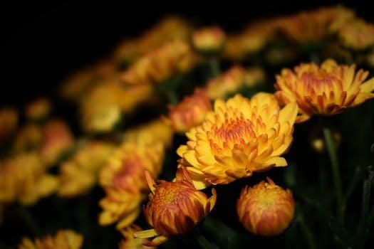 1000 beautiful yellow flowers photos pexels free stock photos selective focus photography of yellow petaled flower mightylinksfo