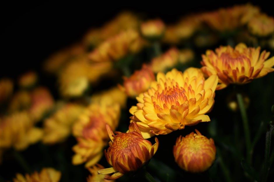 New free stock photo of flowers, garden, yellow