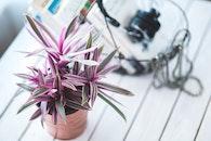 flowerpot, flower, decor