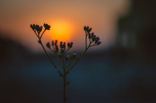 Flower Bloom during Sunrise