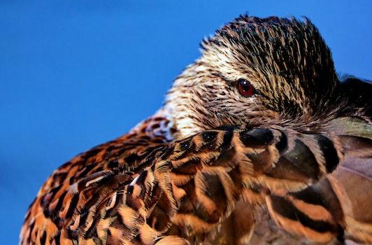 Brown Feathered Bird in Macro Shot