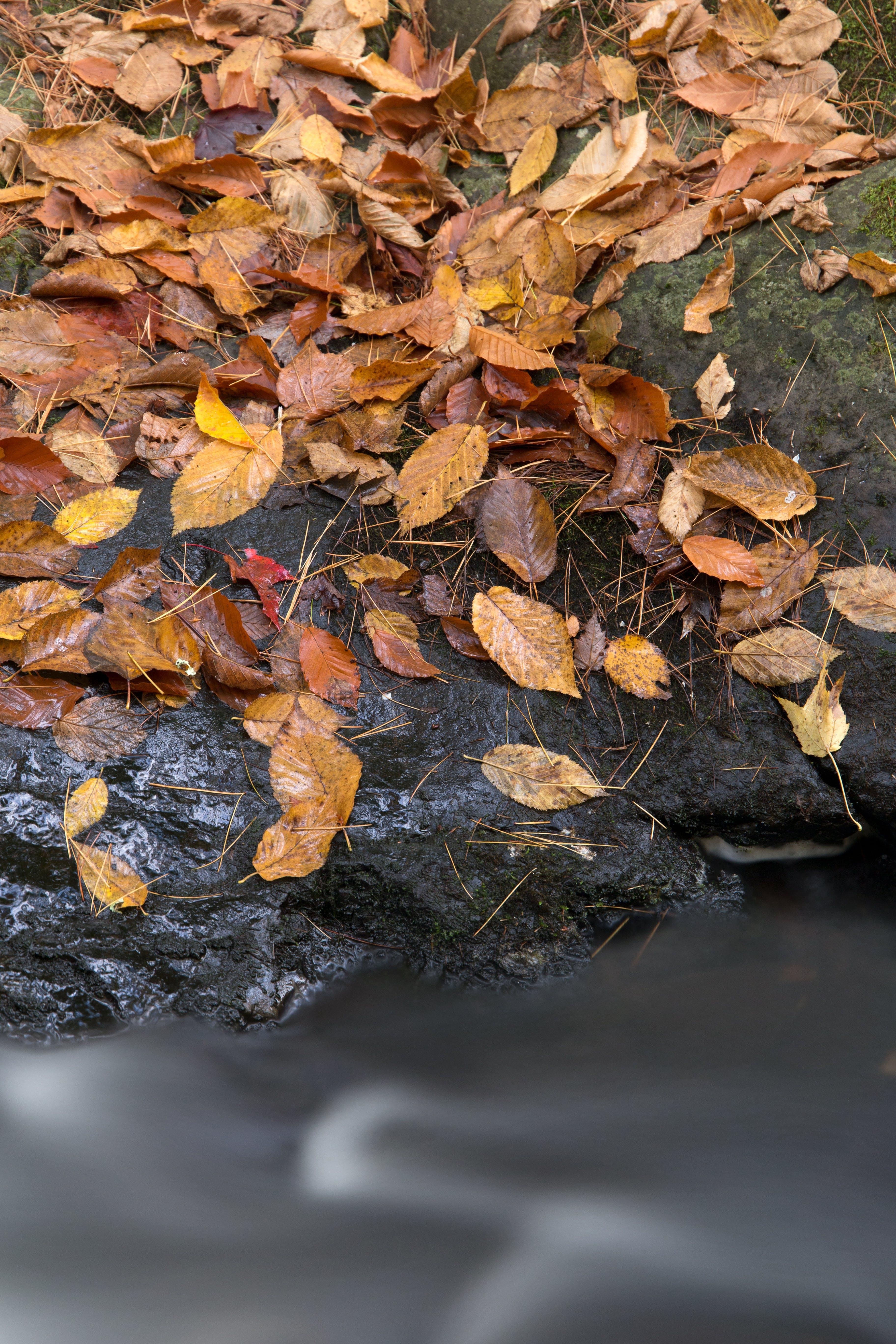 Kostenloses Stock Foto zu natur, wasser, felsen, blätter