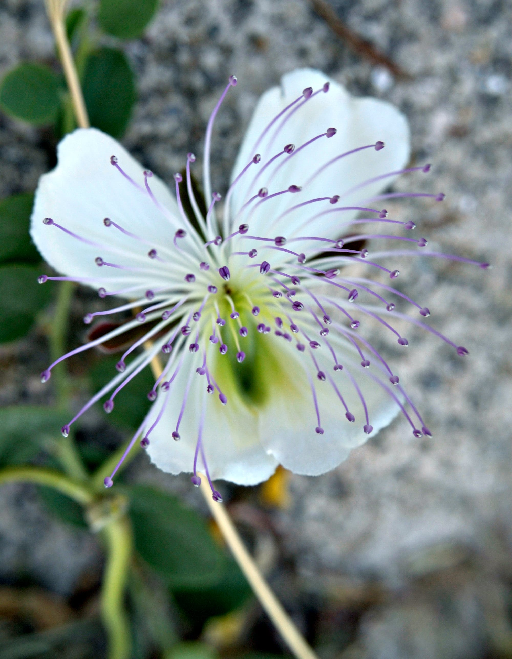 Close-Up Phorography of White and Purple Flower
