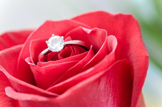 Silver Diamond Embed Ring on Red Rose