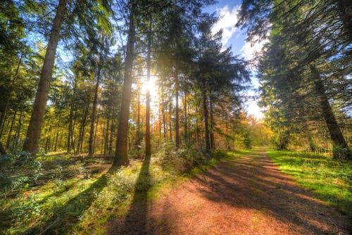 Gratis stockfoto met begeleiding, bomen, Bos, daglicht