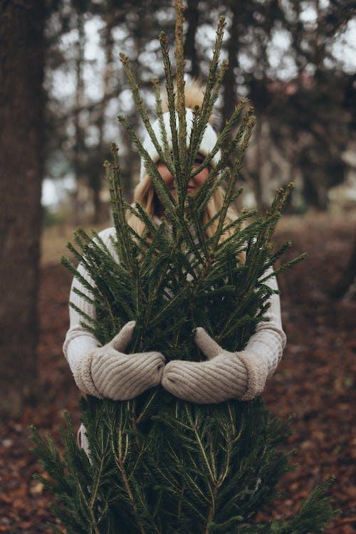 Pessoa Com Luvas Cinza Segurando Uma Planta Verde